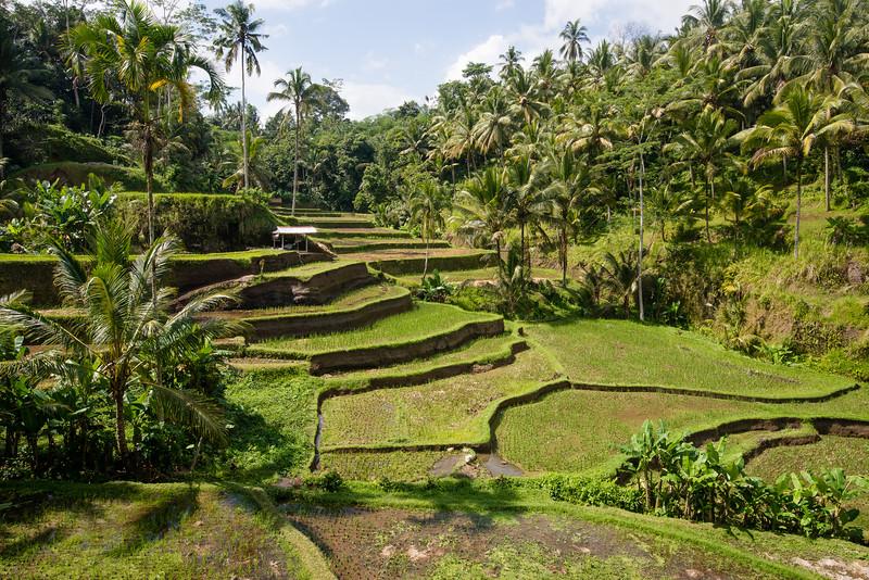 IND Bali -25