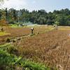 IND Bali -174