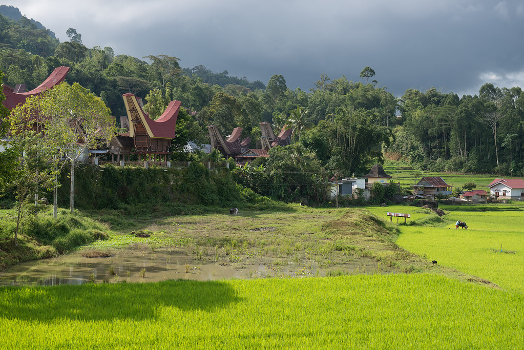 IND Sulawesi -373