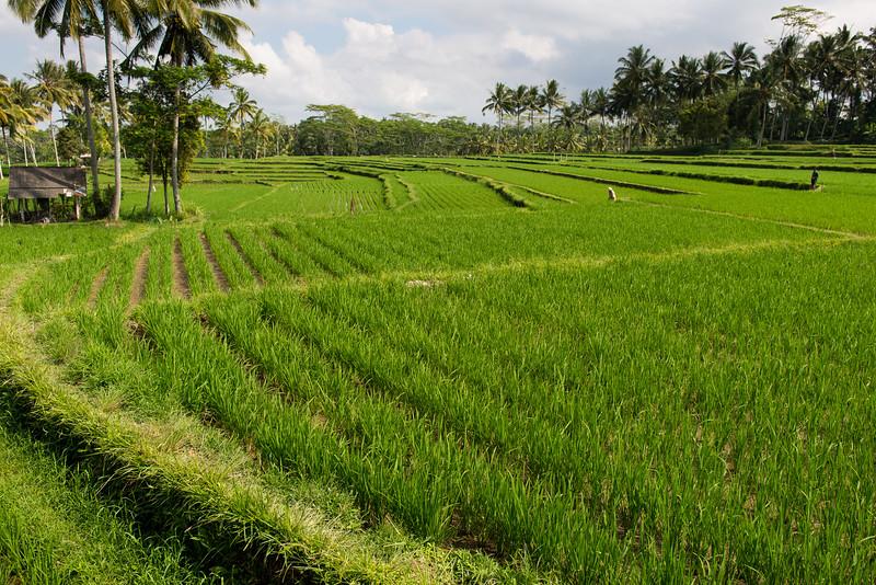 IND Bali -180