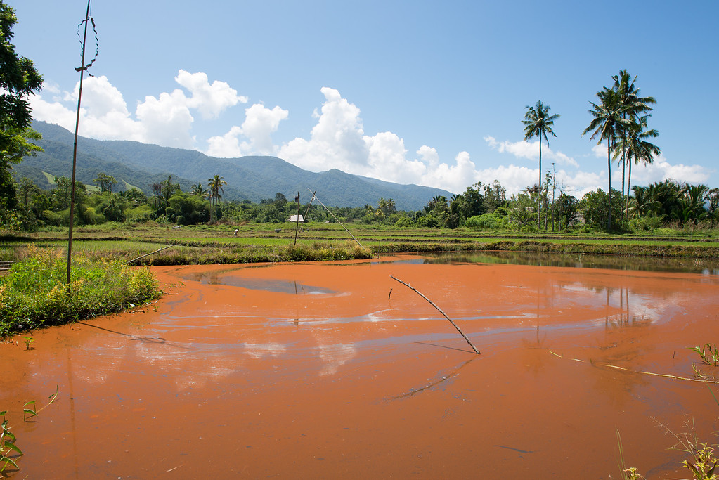 IND Sulawesi -669