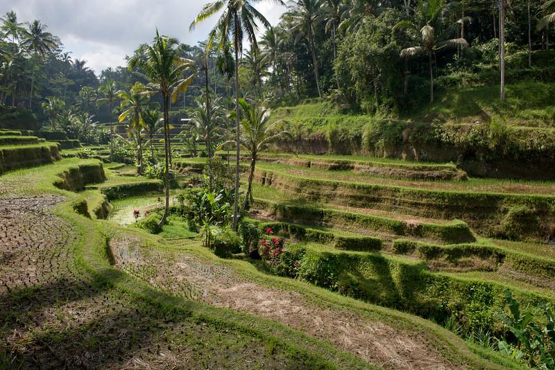 IND Bali -40