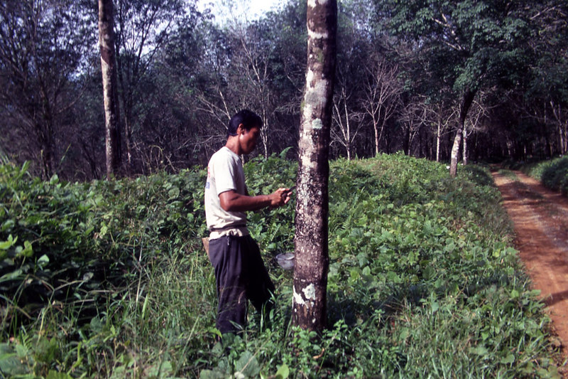 Tapping rubber, Sumatra.