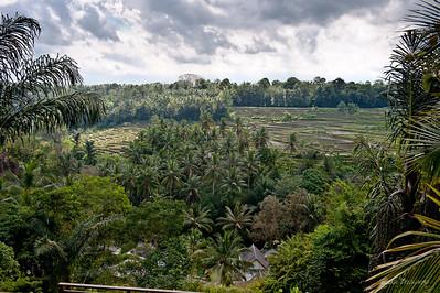 Вид на рисовые поля. Внизу домики отеля