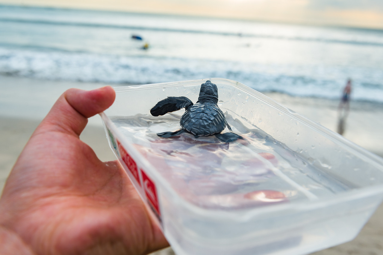 Releasing a baby turtle