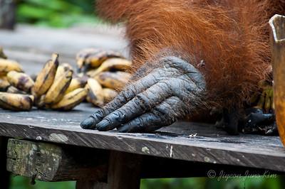 Doyok's hand