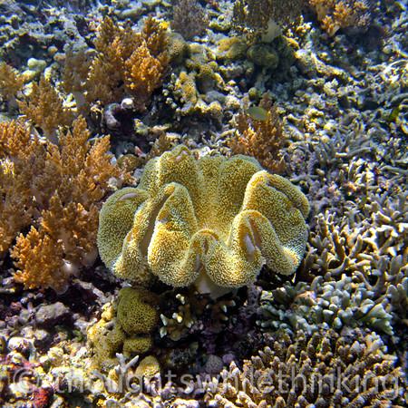 Indonesia 2011 Raja Ampat #1