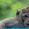 Bali Monkey Forest Sanctuary - Baby Monkey