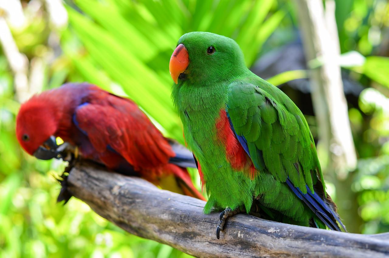 Tropical birds #1