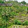 Bali Ubud Rice Field Terraces