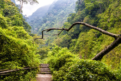 The Trail to Madakaripura Waterfall