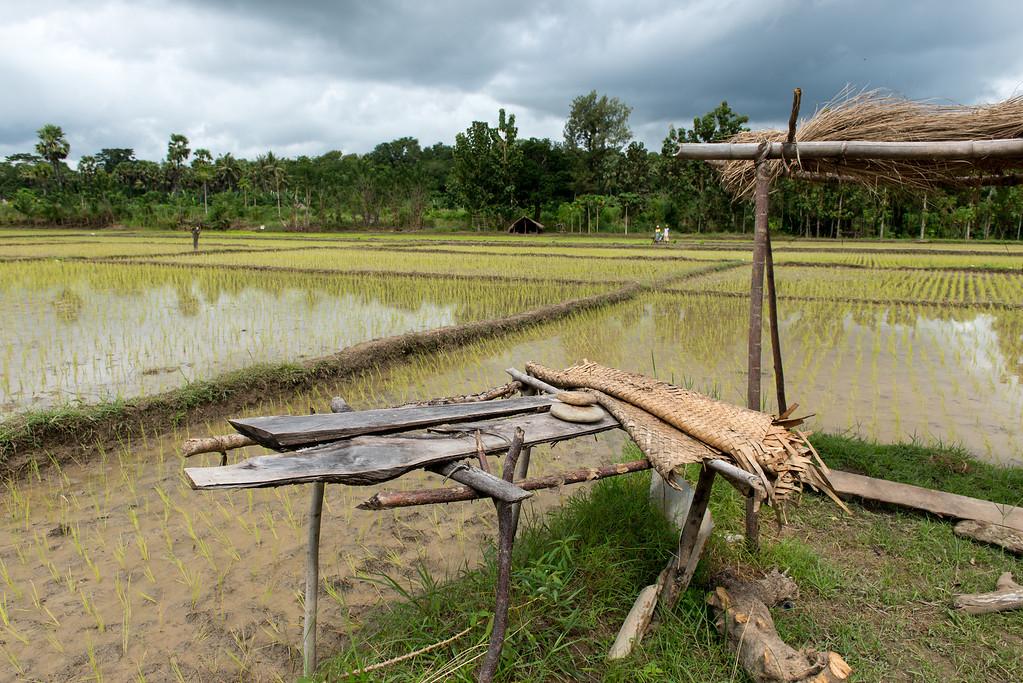 IND Timor _0549