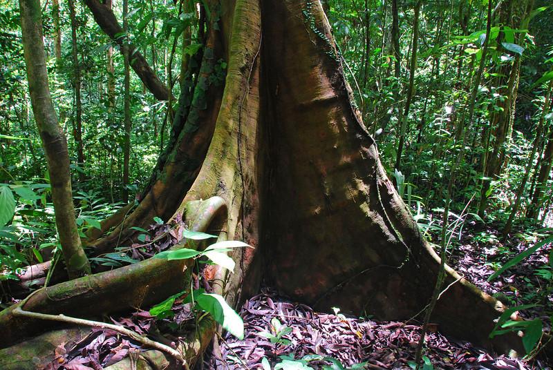 Gunnung Leuser NP,  Sumatra