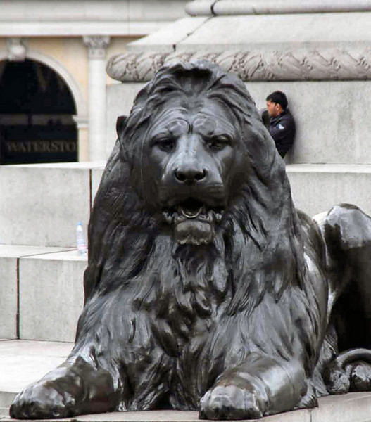 One of the four lions protecting Nelson's Column at Trafalgar Square.