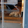 A sleepy dog watches over a storefront in Vienna.