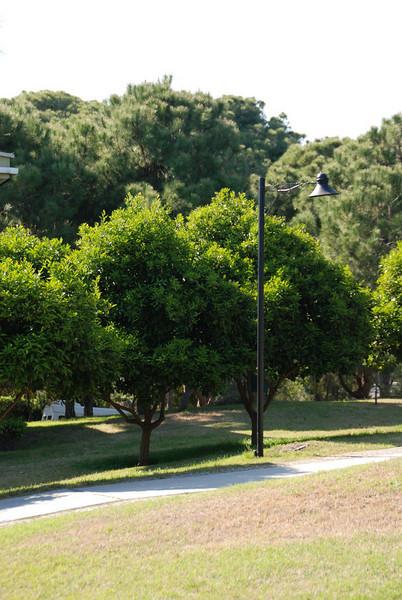 The grounds of the Maritim Pine Beach Resort