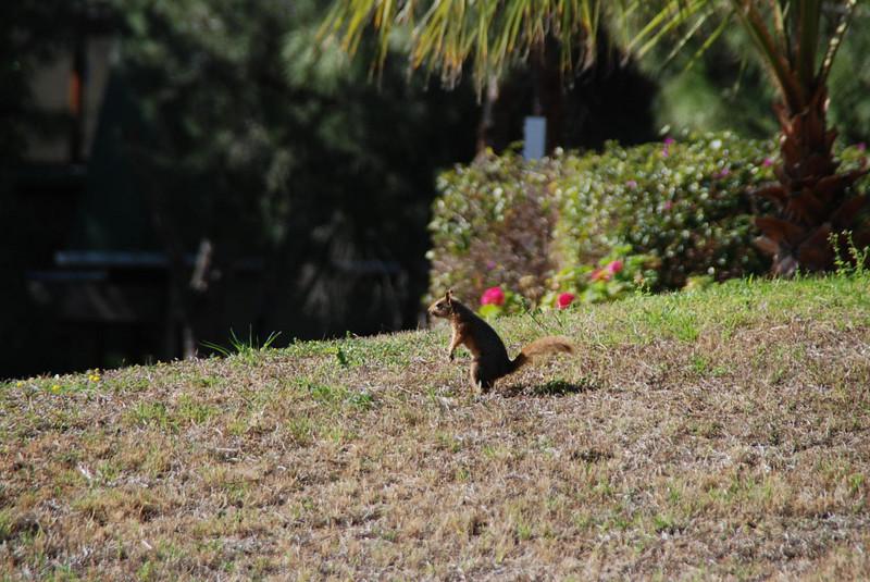 Wildlife at the Maritim Pine Beach Resort