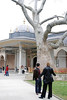 An 800-year old tree at the Topkapi Palace