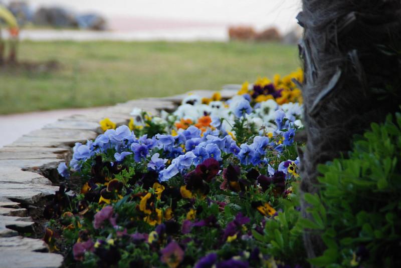 Grounds at the Maritim Pine Beach Resort