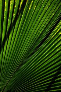 palm_1491