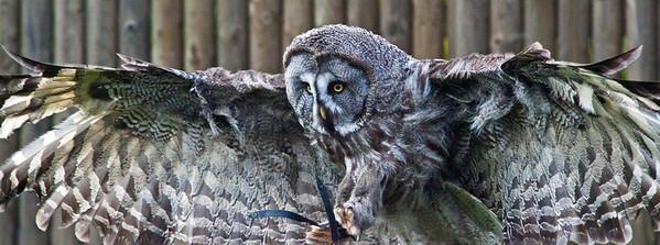 Owl_6813