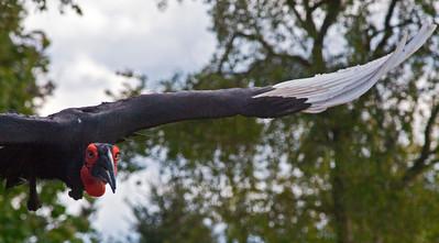 Big Bird f_6819