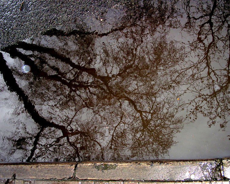 The trees are eerily reflected in the water on a curb in Oxford.