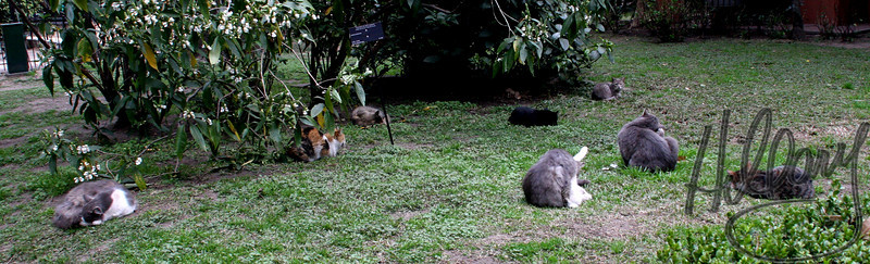 Can you find 8 kitties in this pic? Many Feral cats reside in the Botanical Gardens.