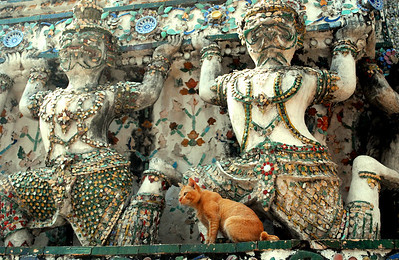 BANGKOK - Wat Arun's fierce-looking demon figures had nothing on the wat's resident cat in terms of stern surveillance over arriving tourists.