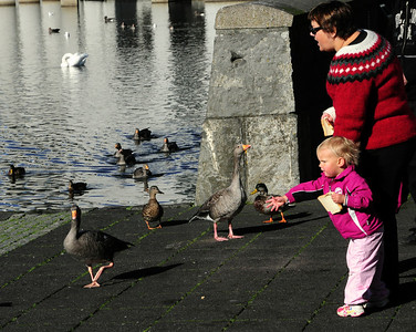 Tjörnin has long been a favorite spot for bringing young children to see and feed the ducks, seagulls, swans and geese that reside there.