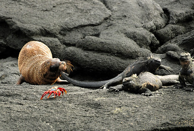 Even the sea lions pick on them -- on land...