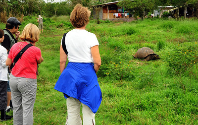 On our first day in the Galapagos, we were greeted by the islands' most iconic welcoming committee - the Galapagos giant tortoise.
