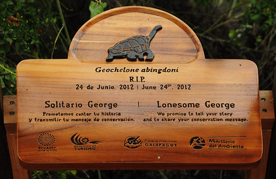 The most famous - Lonesome George, the last of his sub-species - died a few months before our arrival.