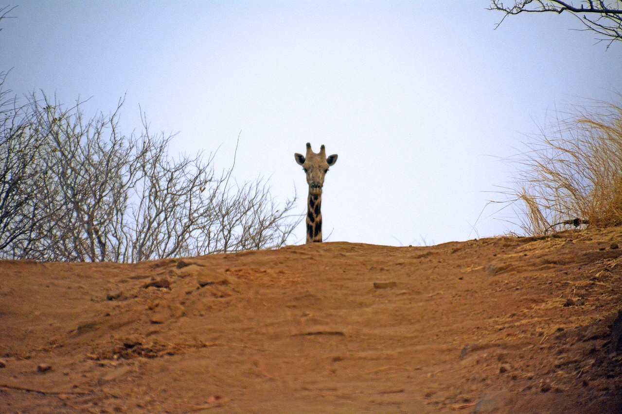 Once, as we drove out of a game preserve in Zimbabwe, this one suddenly appeared over the hilltop like a silent sentry guarding the roadway.