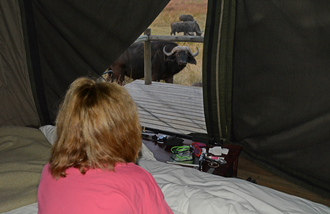 Zipped into our protective huts, we were admonished not to step outside until the morning light.  We discovered why one morning when we opened our tent flap to find a herd of Cape buffaloes grazing outside - and peering in.
