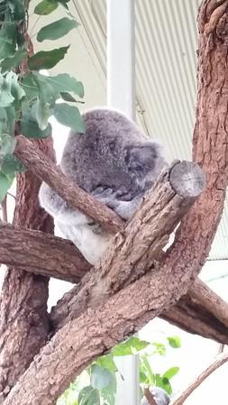 Australia - Sydney 2015