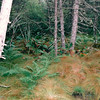 Ferns Mixed with Sea Grasses - Tiverton on Long Island - Digby Neck, Nova Scotia, Canada  9-2-97