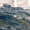 Seagull on Rocks - Ovens Natural Park - Riverport, Nova Scotia, Canada  9-1-97