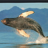 """This Is The One I Wished We'd Seen - S/V """"Cory"""" - St. Andrews by the Sea, New Brunswick, Canada  8-25-97"""