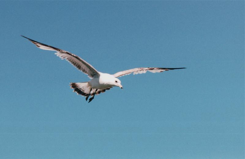 Seabird - Thunder Bay, Ontario, Canada  6-3-99
