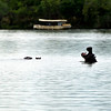 Hippo - river game drive, Zimbabwe
