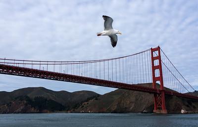 Harbour cruise, San Francisco
