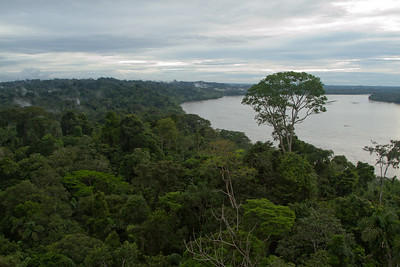View from the rainforest tower