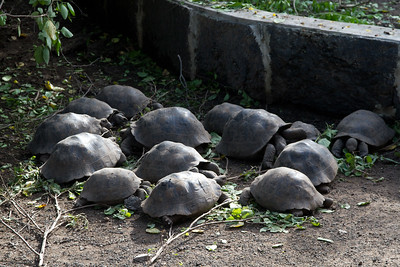 hungry, hungry tortoises