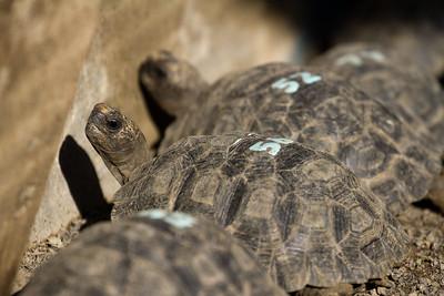 the tiniest of tortoises!