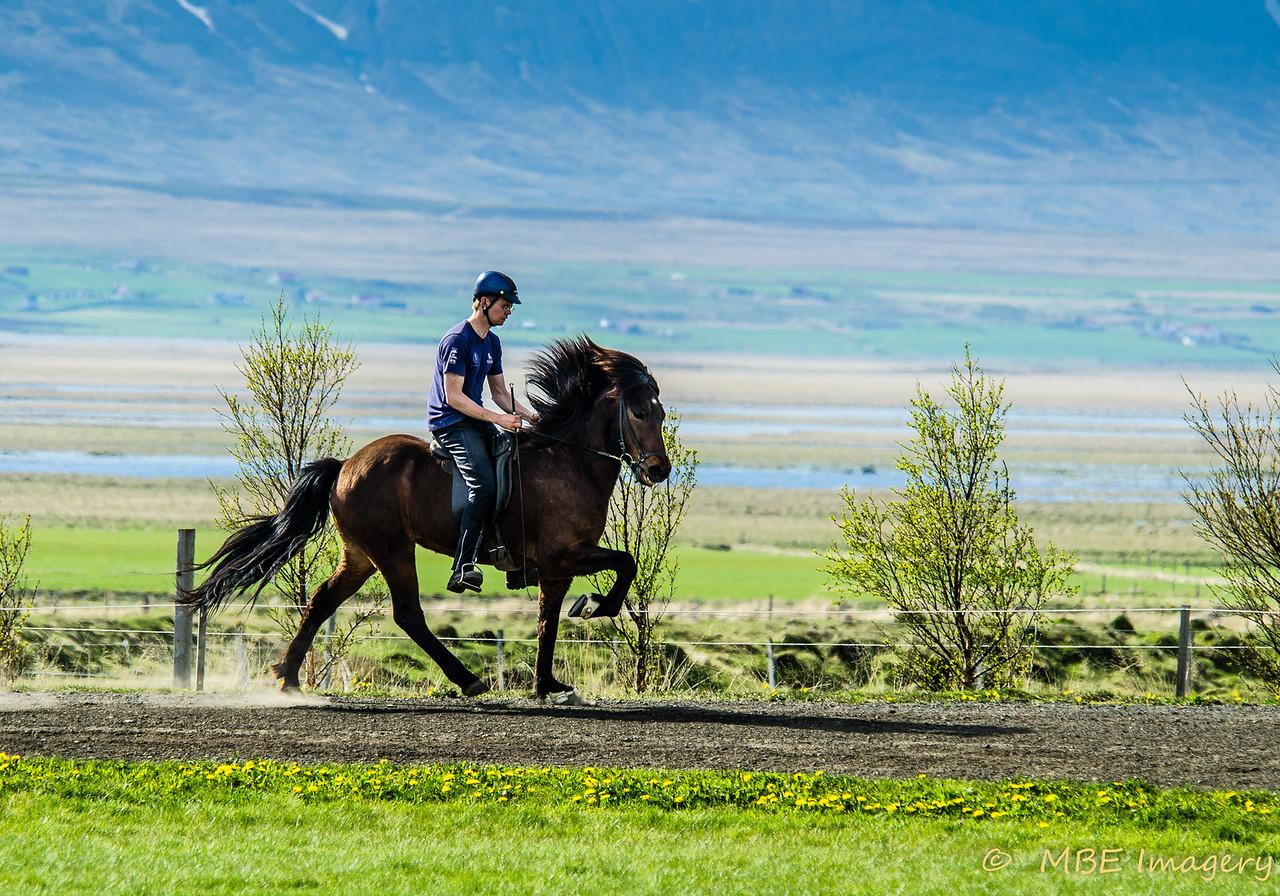 Iceland Horse Farm