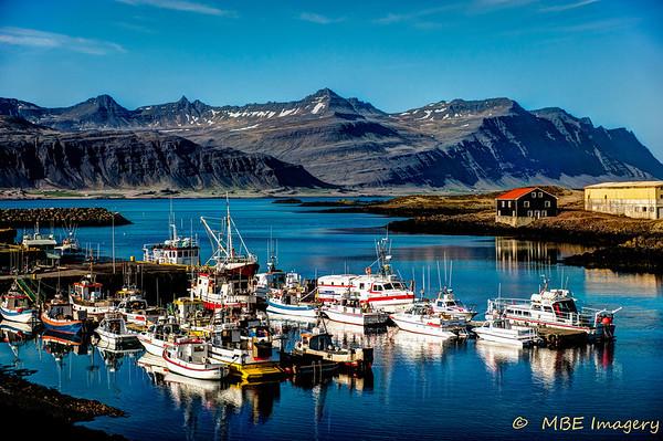 Iceland: A Birding Paradise
