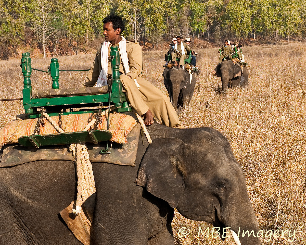 Our group returning from elephant ride to view tigers
