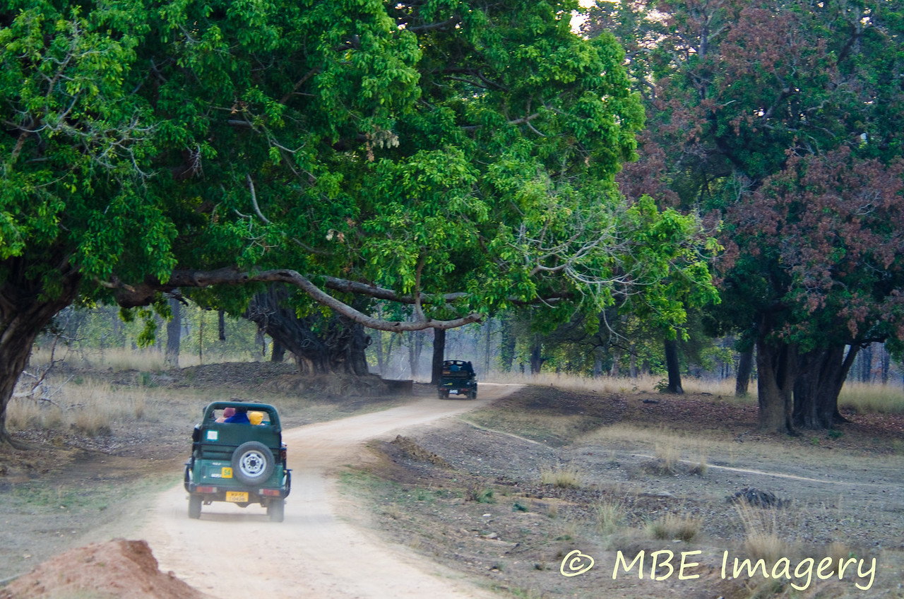 """""""Gypsy"""" safari vehicles entering Kanha National Park in the early morning"""