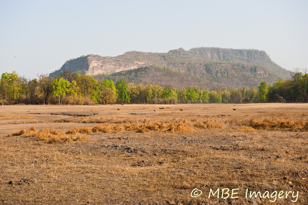 Meadow at Bandhavgarh with hills in the background
